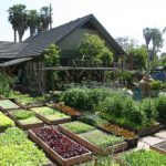 How One Family Grows 6,000 lbs Veggies On 1/10th Acre In Los Angeles